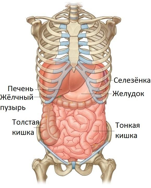 Тяжесть под правым ребром