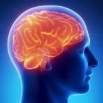 onk_brain