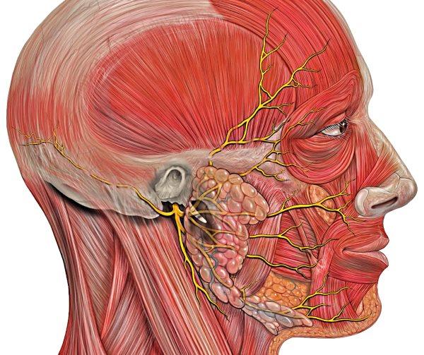 Неврит лицьового нерва лікування, симптоми, причини