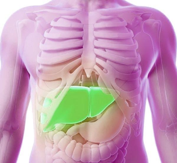 Перелік захворювань печінки, їх симптоми та діагностика